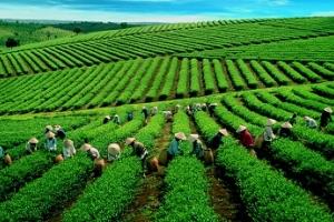 Quy trình hỗ trợ khách hàng vay vốn ngân hàng tại địa bàn tỉnh Thái Nguyên